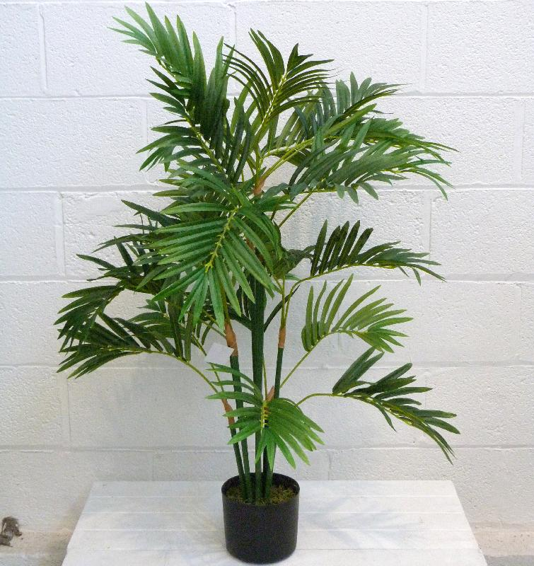 Parlor palm areca palm for Pictures of areca palm plants